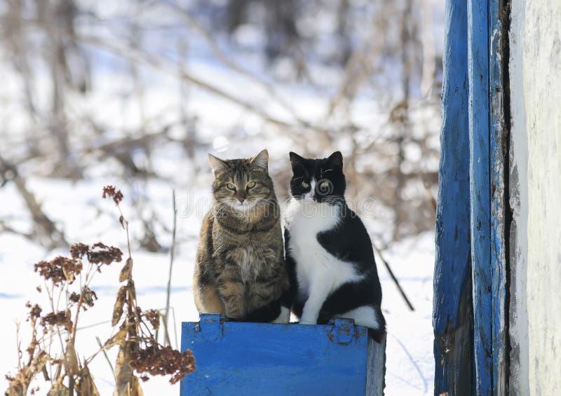 Portret dwa śmiesznego ślicznego kota siedzący outside na Pogodnej wiośnie zdjęcie royalty free
