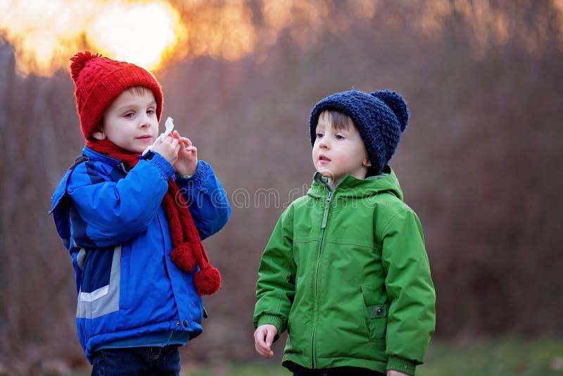 Portret dwa uroczej chłopiec, bracia, na zima dniu, zmierzch obraz stock