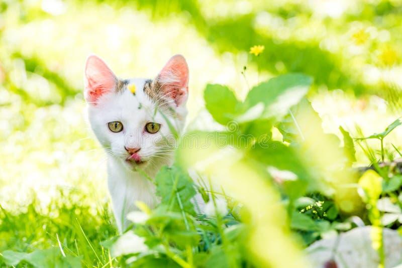 Portret figlarka w trawie z jasnym tłem zdjęcia stock