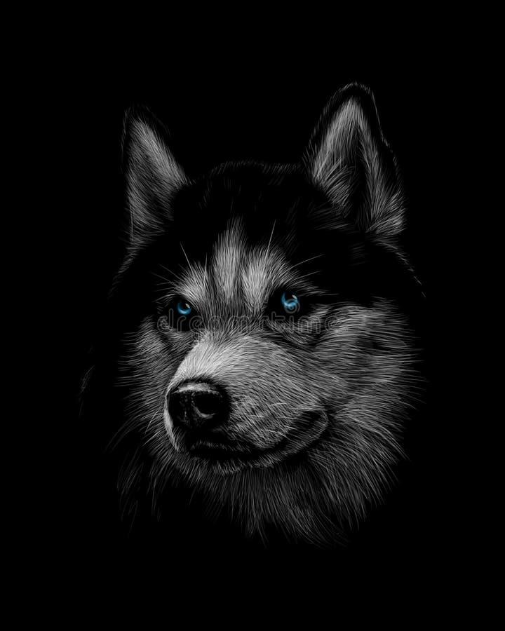 Portret głowa Syberyjski husky z niebieskimi oczami ilustracja wektor