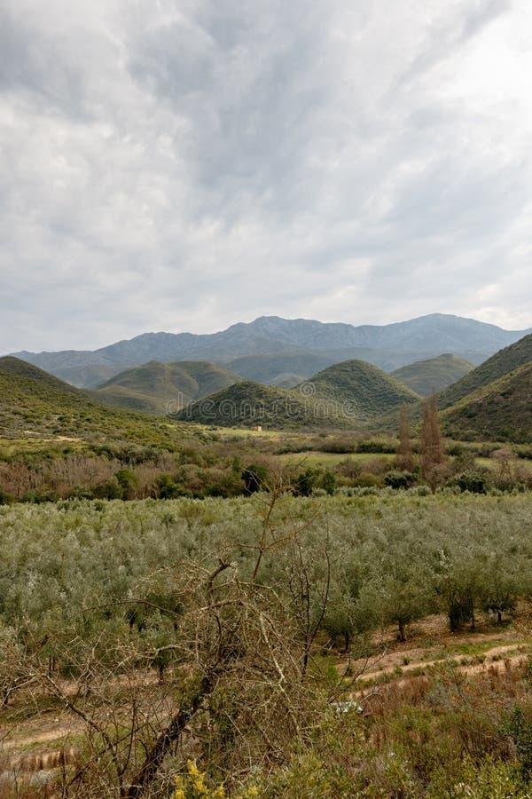 Portret - Groene boomgaardmening met bergen en humeurige wolken stock foto's