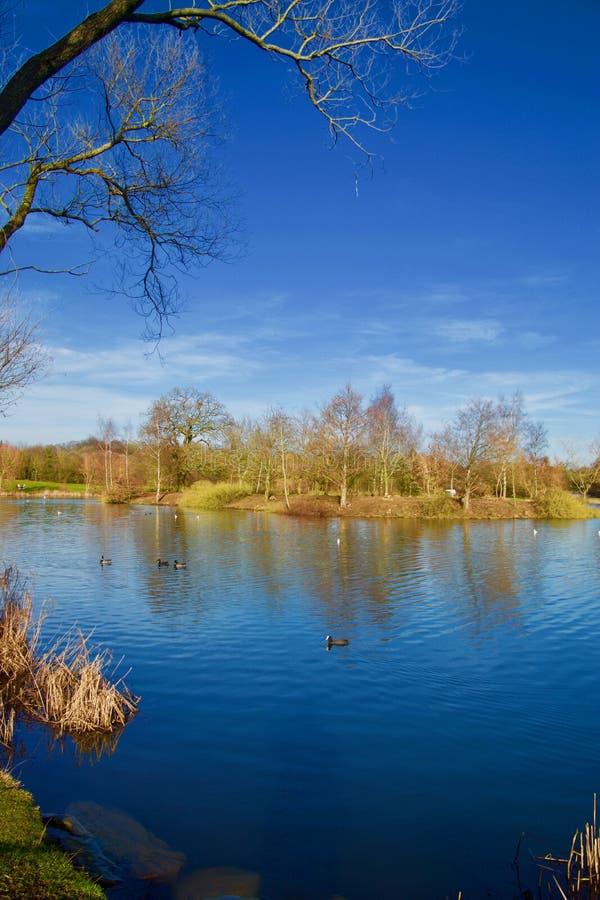 Portret jezioro w zimie zdjęcie stock
