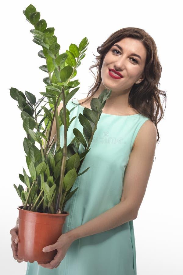 Portret Kaukaska brunetki kobieta z Zamioculcas dolara drzewem fotografia stock