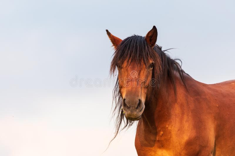 Portret końska pozycja z jego plecy słońce przy zmierzchem fotografia royalty free