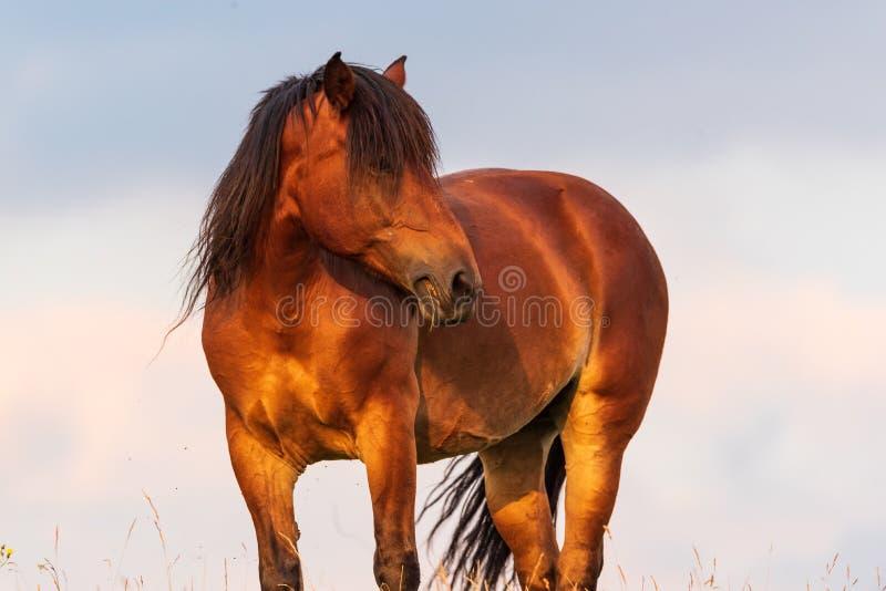 Portret końska pozycja z jego plecy słońce przy zmierzchem na niebie zdjęcie stock