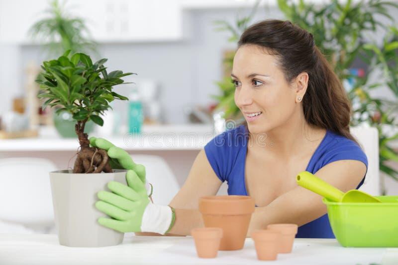 Portret kobieta bierze opiek bonsai obraz stock