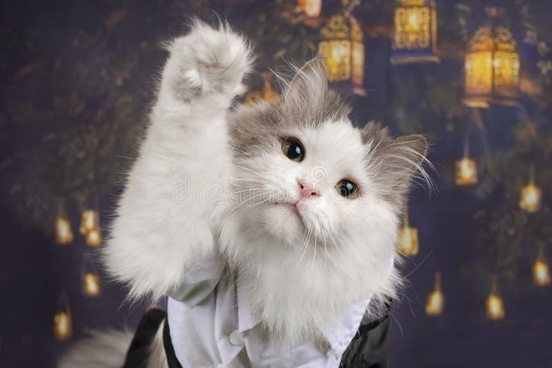 Portret kot na tle Chińscy lampiony fotografia royalty free