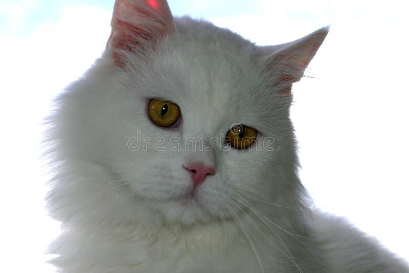 portret kota zdjęcia royalty free