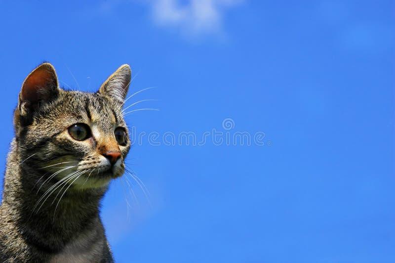 portret kota obrazy royalty free