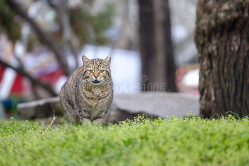 Portret kota obsiadanie na trawie 2 obrazy stock