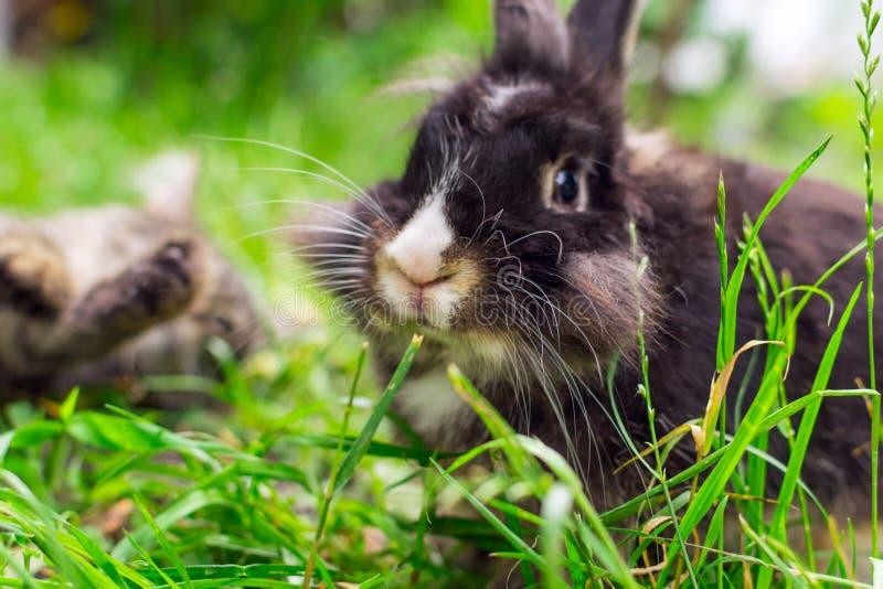 Portret królik w trawie obraz royalty free