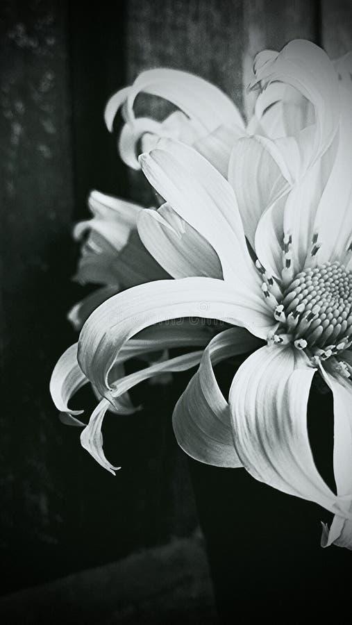 portret kwiat obraz royalty free