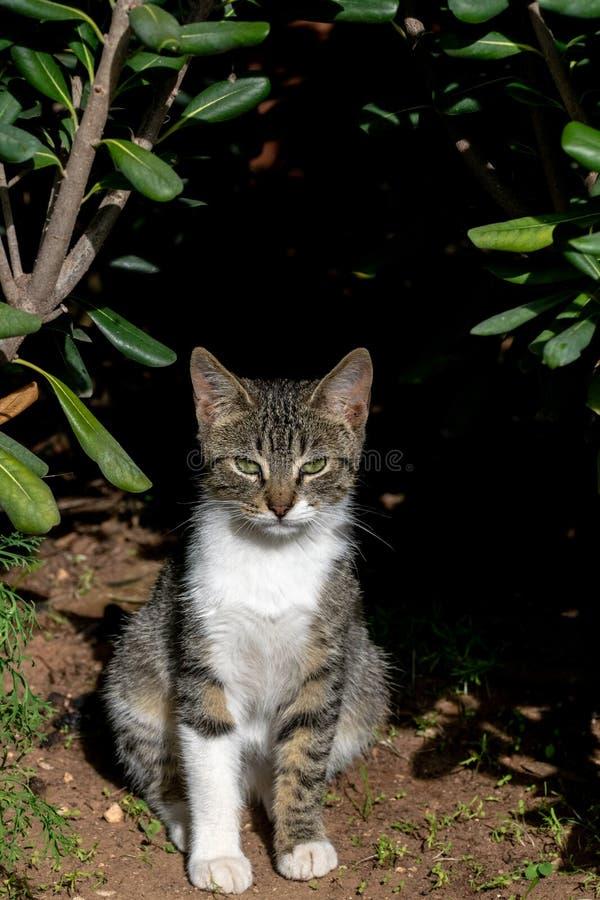 Portret młody tabby kot w ogródzie obrazy royalty free