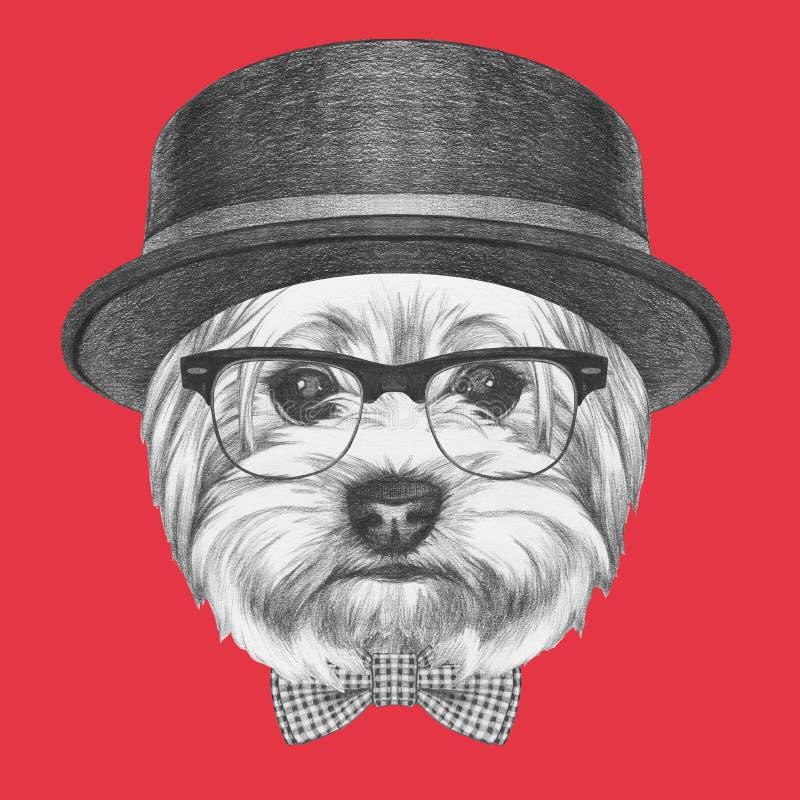 Portret modnisia pies Yorkshire Terrier z okularami przeciwsłonecznymi, kapeluszem i łęku krawatem, ilustracja wektor