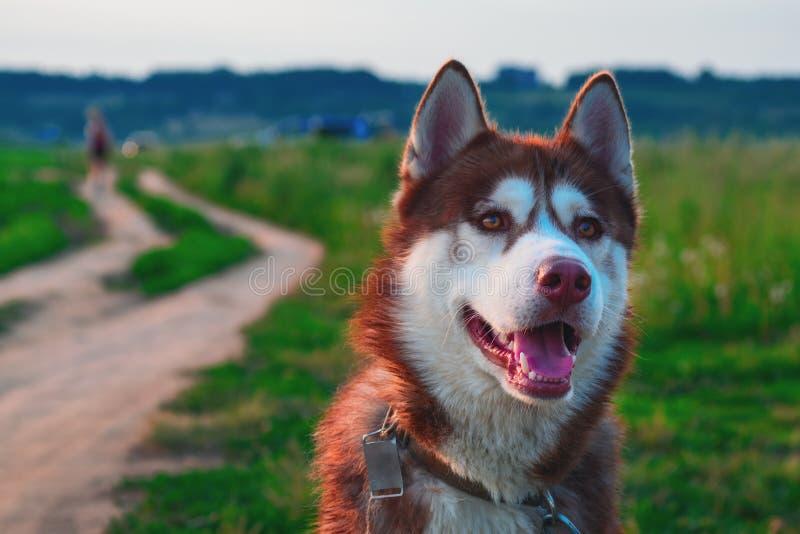 Portret mooie hond in aardlandschap royalty-vrije stock fotografie