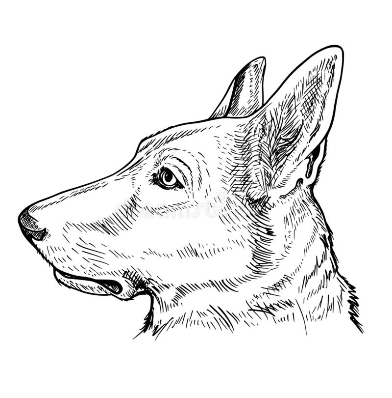 Portret Niemiecki Pasterski pies royalty ilustracja