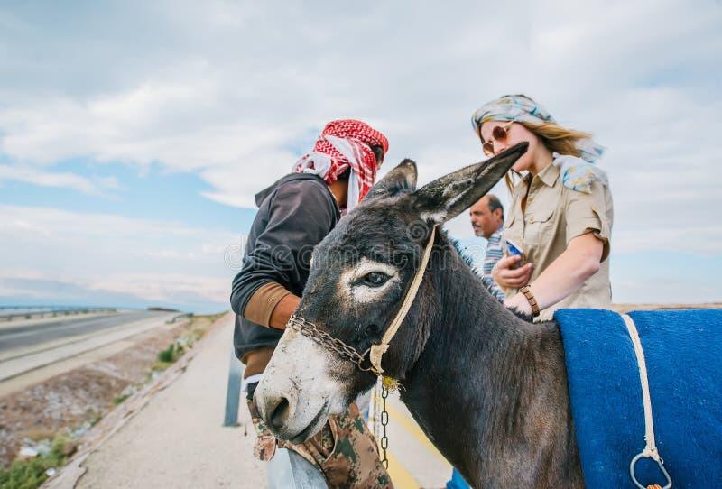 Portret osioł w drodze Turystyczna kobieta stoi blisko zdjęcia stock