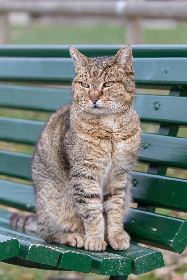 Portret piÄ™kny kota obsiadanie na Å'awce obrazy royalty free