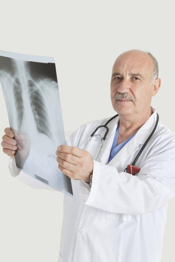 Portret poważna starsza samiec lekarka trzyma medycznego radiograph nad szarym tłem fotografia stock