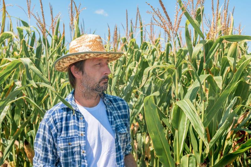 Portret przystojnego hodowcy kukurydzy na polu uprawy kukurydzy fotografia royalty free