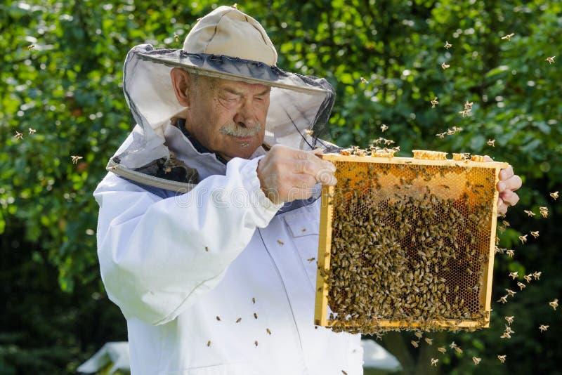 Portret pszczelarka z honeycomb obraz stock