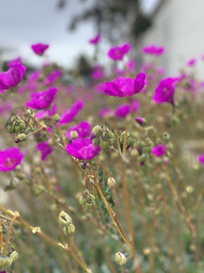 Portret purpur stylowi kwiaty fotografia stock
