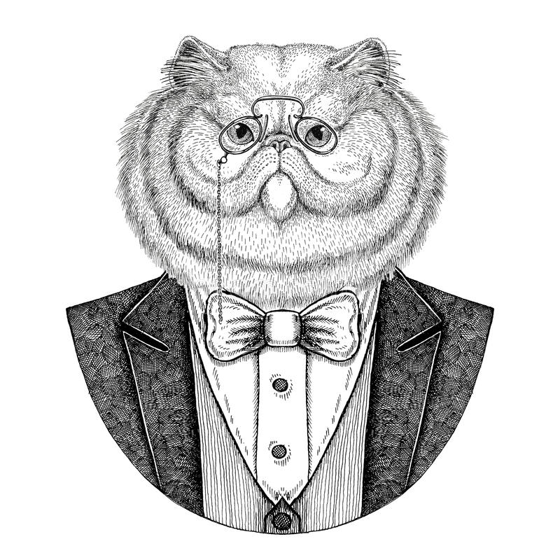 Portret puszysta zwierzęca ręka rysująca perskiego kota modnisia ilustracja dla tatuażu, emblemat, odznaka, logo, łata, koszulka ilustracja wektor