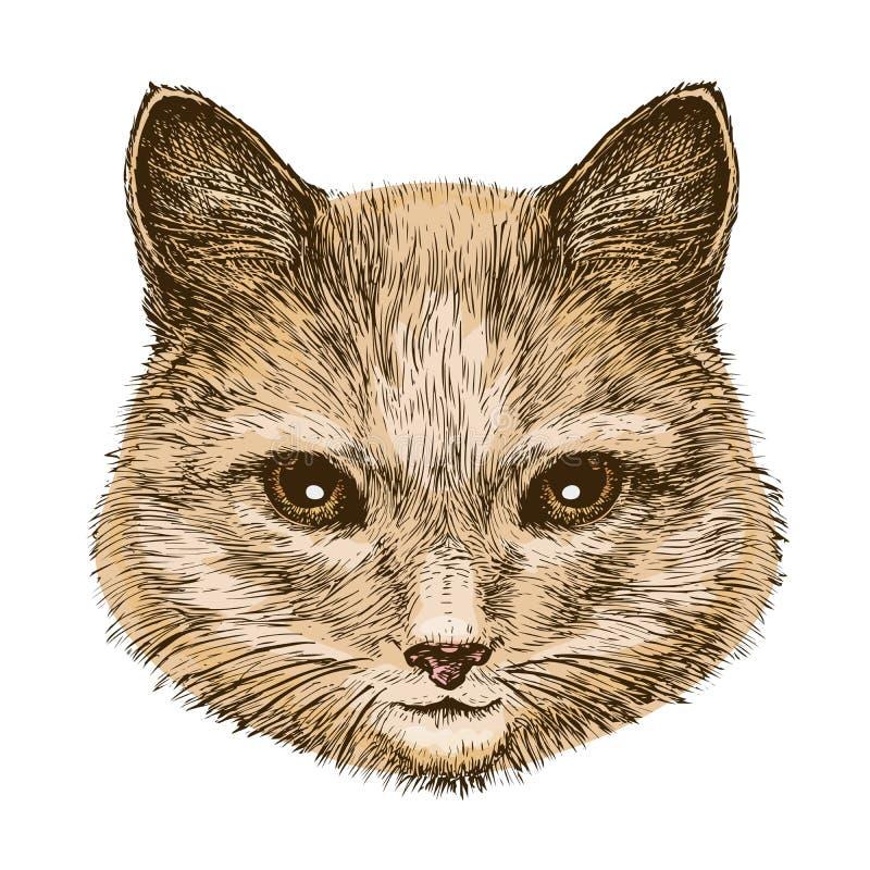Portret puszysty kot Nakreślenie rocznika wektoru ilustracja ilustracji