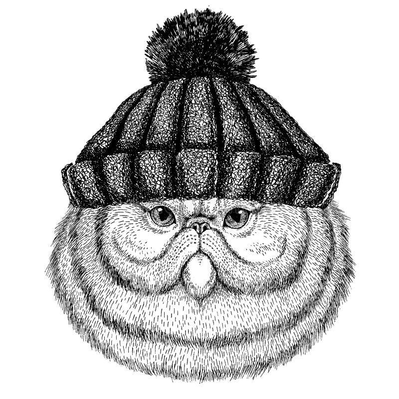 Portret puszysty perskiego kota Chłodno zwierzę jest ubranym trykotowego zima kapelusz Ciepła pióropuszu beanie bożych narodzeń n ilustracji