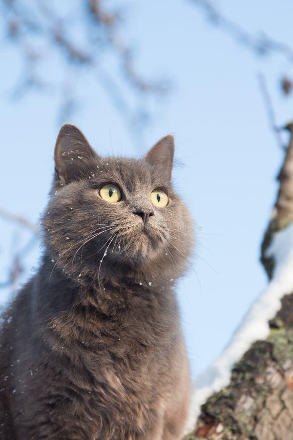 Portret puszysty szary kot na drzewie z śniegiem zdjęcia royalty free