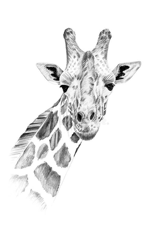 Portret rysujący ręką w ołówku żyrafa royalty ilustracja