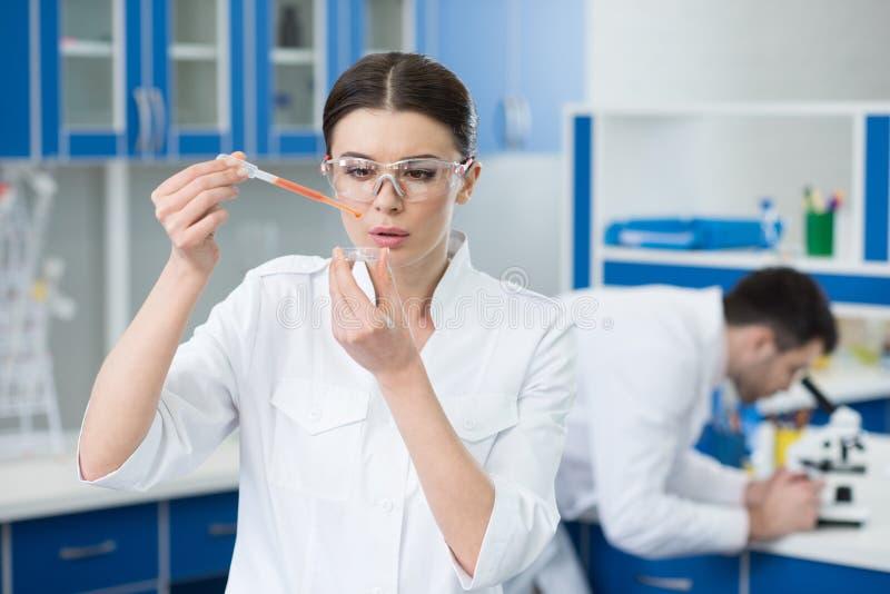 Portret skoncentrowany kobieta naukowa działanie zdjęcie stock