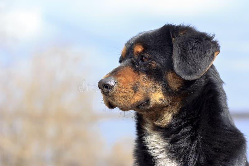 Portret Smutny bezdomny pies zdjęcie royalty free