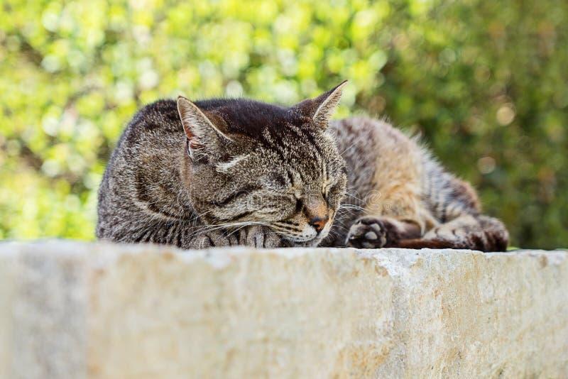 Portret spać ślicznego brązu tabby kota zdjęcie stock