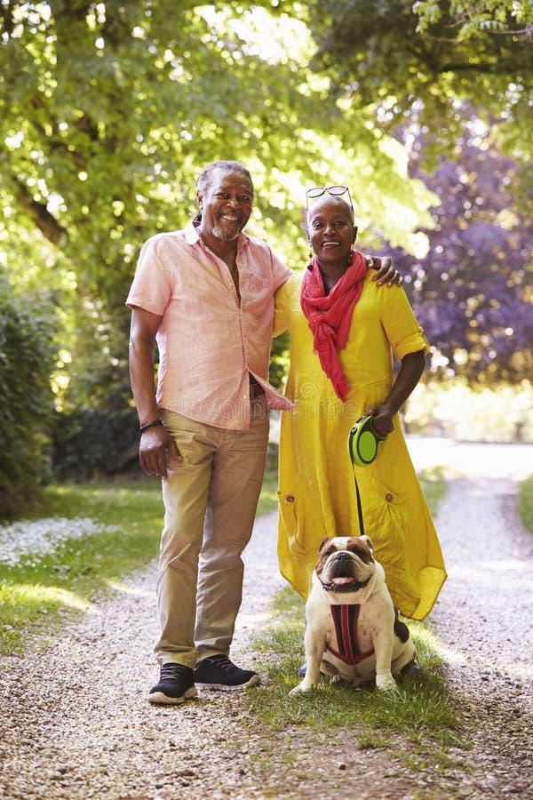 Portret Starszy pary odprowadzenia zwierzęcia domowego buldog W wsi fotografia royalty free
