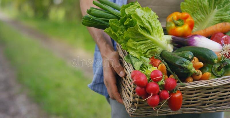 Portret szczęśliwego młodego średniorolnego mienia świezi warzywa w koszu Na tle natura pojęcie biologiczny, życiorys pr, fotografia royalty free