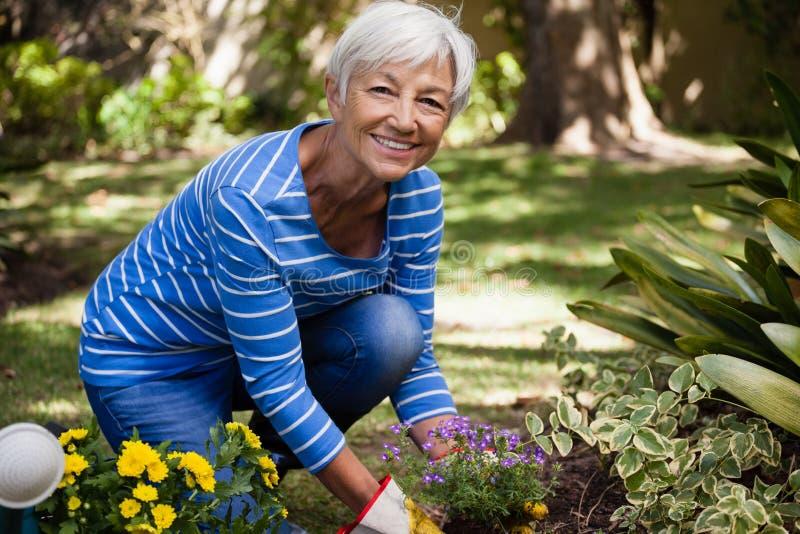 Portret szczęśliwy starszy kobiety klęczenie podczas gdy zasadzać kwitnie obraz royalty free
