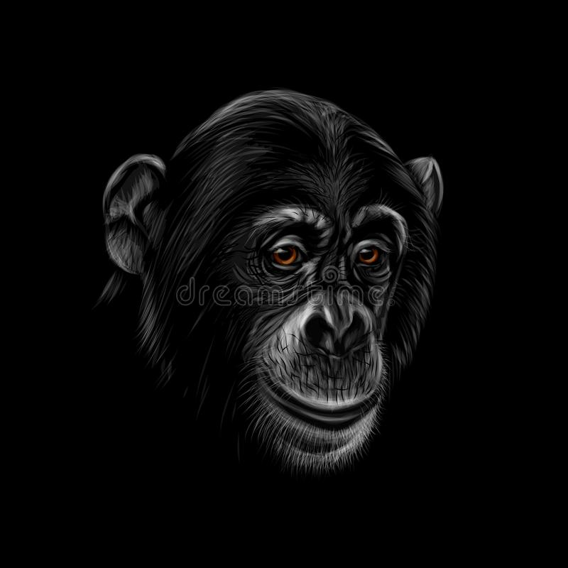 Portret szympans głowa na czarnym tle royalty ilustracja