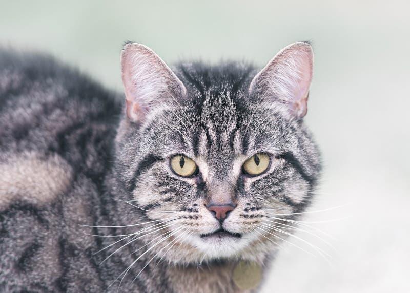 Portret Tabby kot w zimie fotografia royalty free