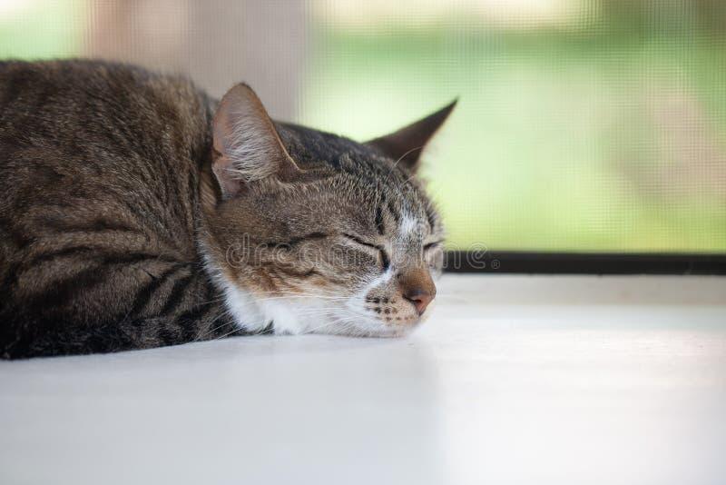 Portret tabby kota dosypianie na nadokiennym parapecie obrazy stock