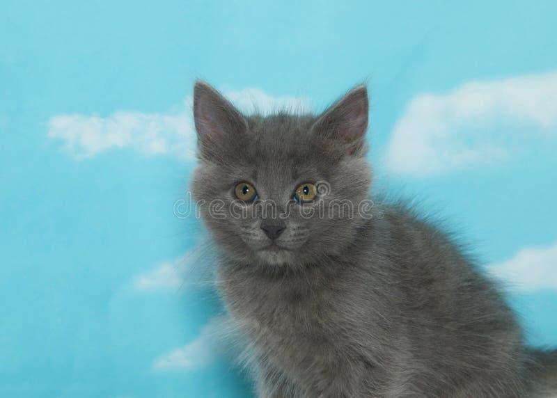 Portret van één pluizig grijs katje, hemelachtergrond stock foto's