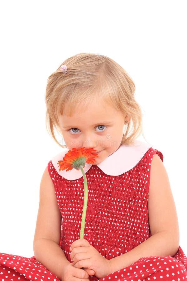 Portret van 4 jaar oud meisjesw stock afbeelding