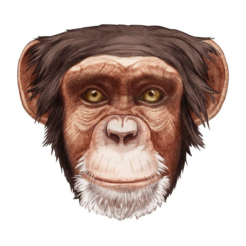 Portret van aap royalty-vrije illustratie