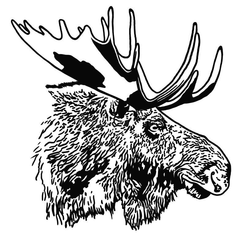 Portret van Amerikaanse elanden royalty-vrije illustratie