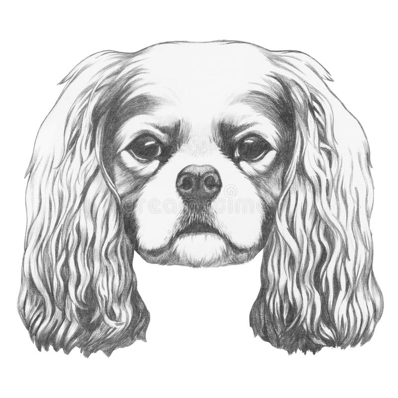 Portret van Arrogante Koning Charles Spaniel royalty-vrije illustratie