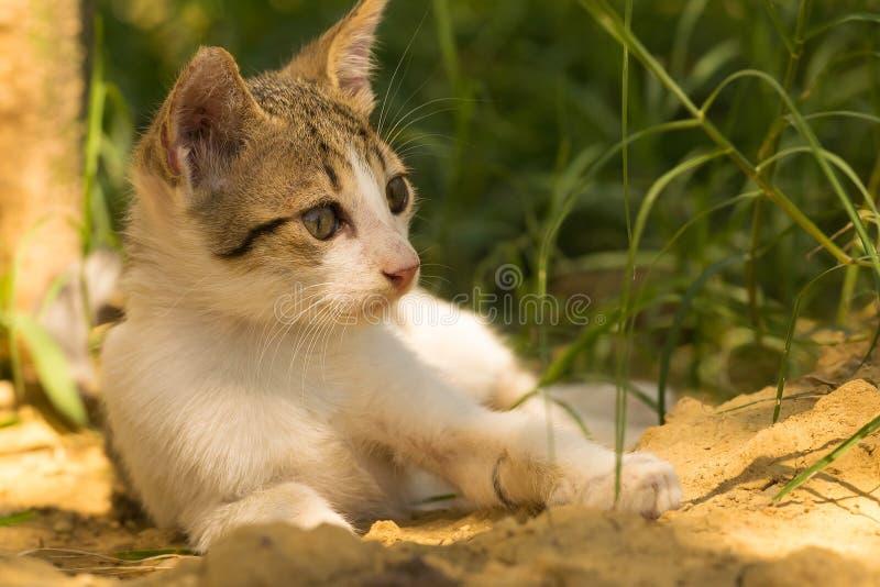 Portret van baby het leuke kat stellen stock fotografie