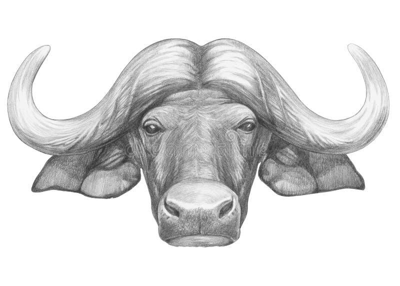 Portret van buffels vector illustratie