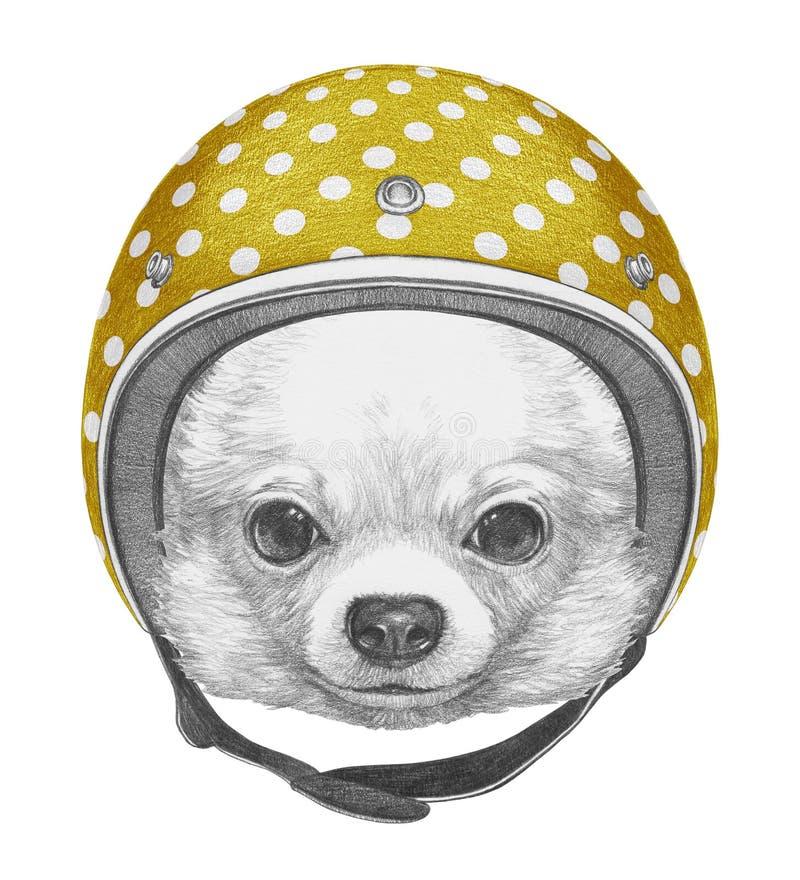 Portret van Chihuahua met Helm stock illustratie