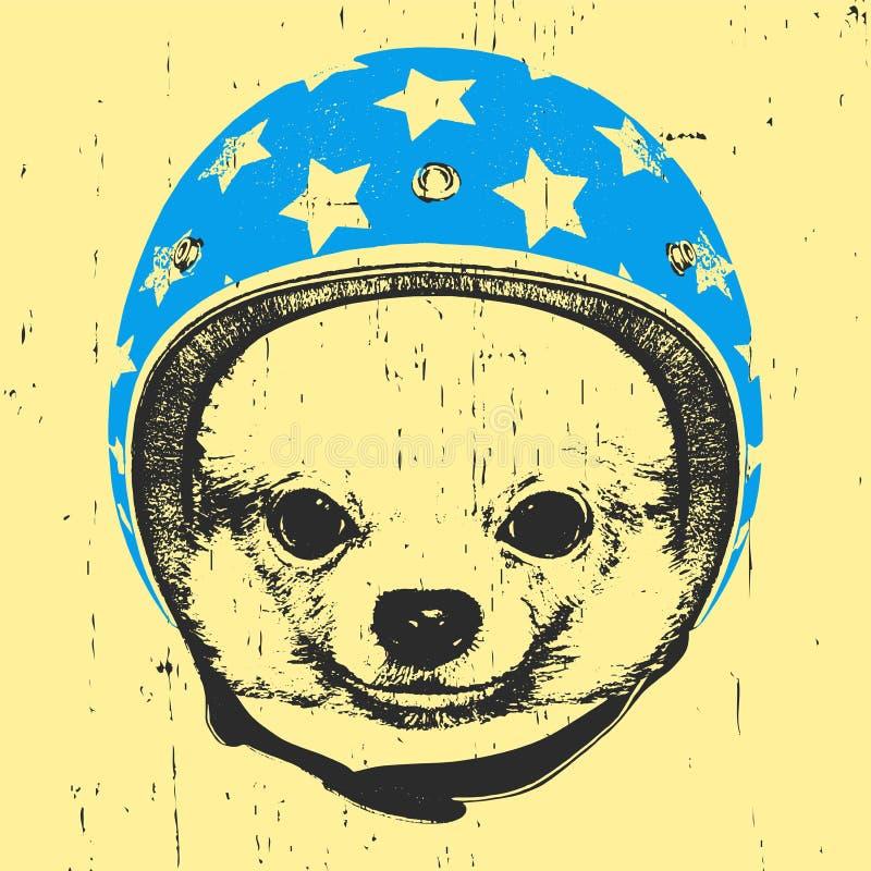Portret van Chihuahua met Helm royalty-vrije illustratie