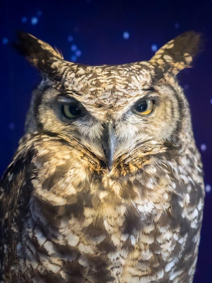 Portret van de hemel Europees-Aziatische van Eagle Owl (Bubo-bubo) backround stock afbeeldingen